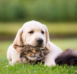 Your organic pet